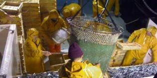 Seguridad y salud laboral en el sector pesquero