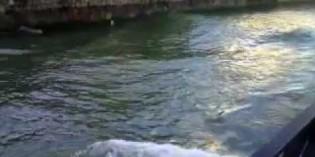 La Agencia Vasca del Agua limpia la ribera del río Oiartzun