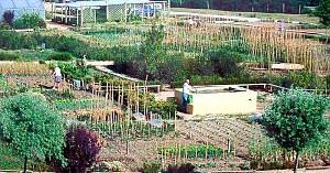 Imesapi realizará el acondicionamiento de 12 parcelas de Basaldea