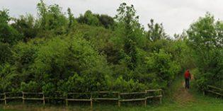 Muskiz acometerá la regeneración ambiental y adecuación de La Glorieta