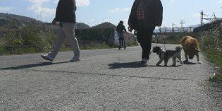 Barakaldo asfaltará el paseo entre Lutxana y Rontegi